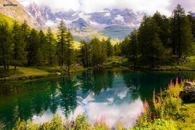 Valle de Aosta - Gatti Valdostani