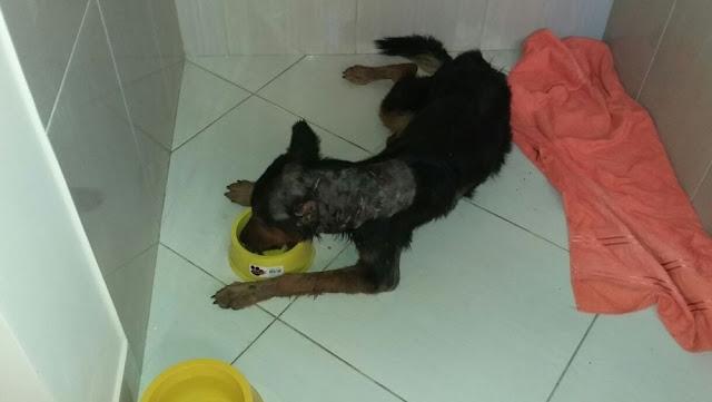 Cadela sobrevive após levar 10 facadas no interior do Acre