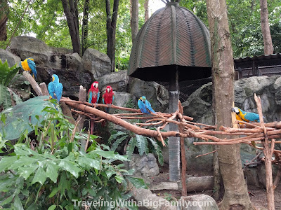 Seeing Macaw parrots with children at zoo in northern Thailand