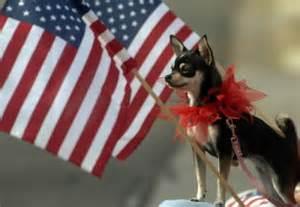 All American Pet
