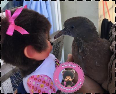 Diana la Monchhichi et Colombine le bébé pigeon -pigeonneau - oisillon