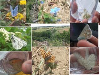 papillons reconnaître