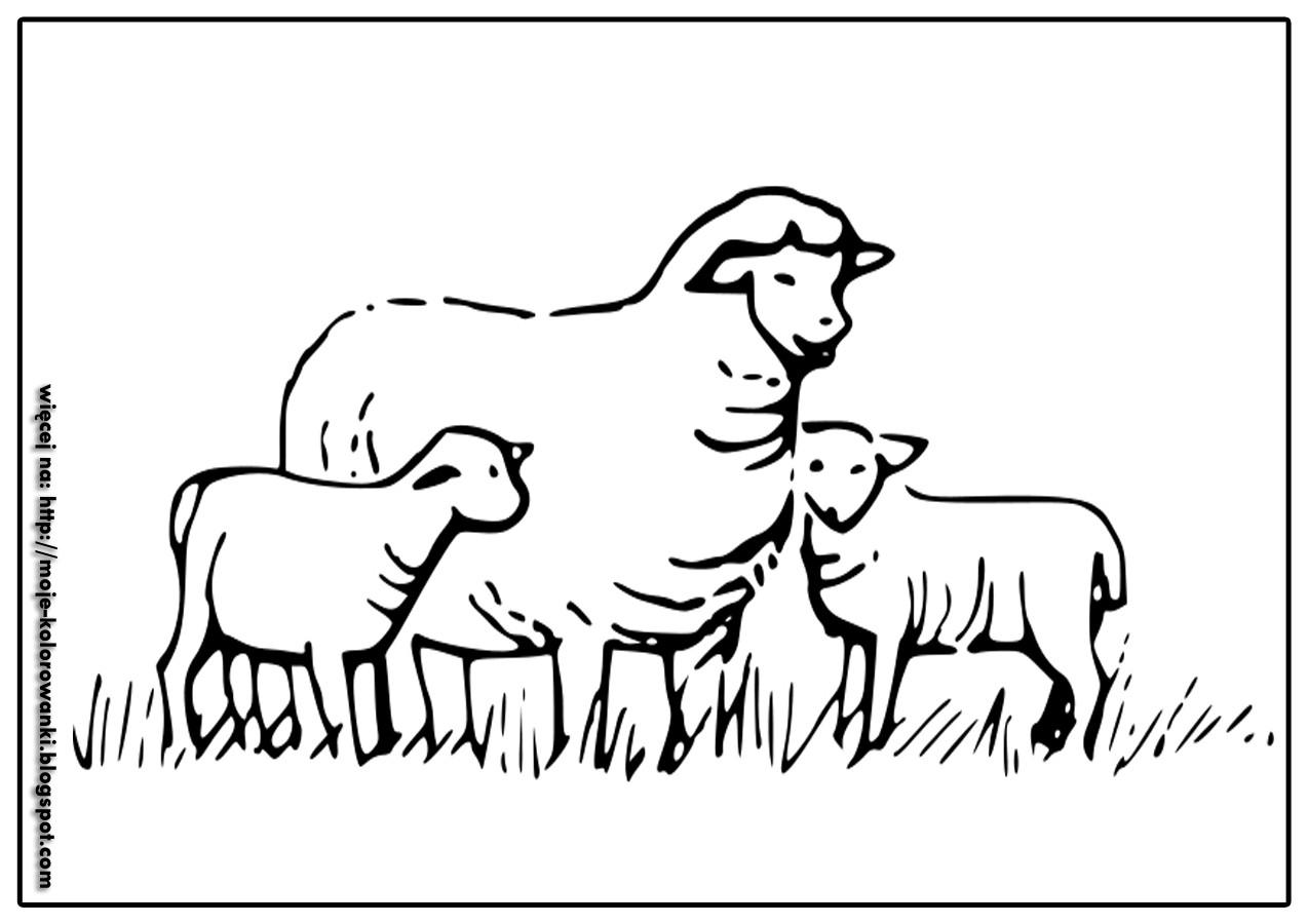 Kolorowanki Dla Dzieci Owieczki