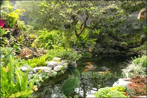 cải tạo hồ Koi, thiết kế hồ cá koi đẹp, thi công hồ cá Koi trọn gói