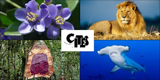 CITES, CITES Animal and Plant Committee, Lion, purple flower, hammerhead shark