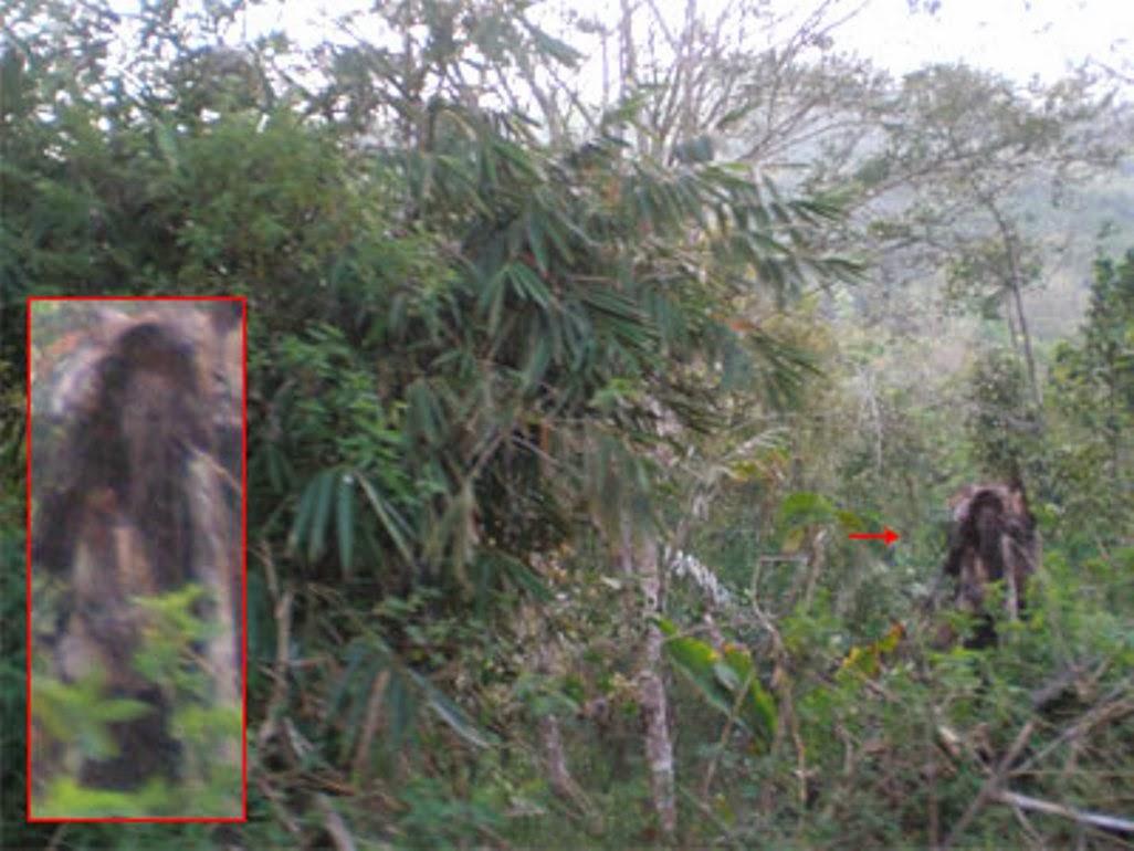 Foto Penampakan Mahluk Aneh Tapi Nyata Tertangkap Kamera Dp Bbm