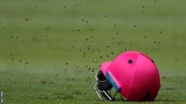 Bees stop South Africa v Sri Lanka play