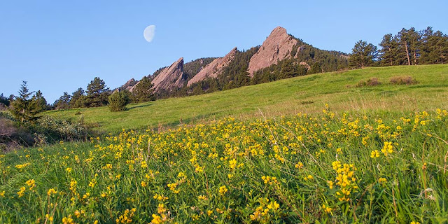 Yellow wildflowers and the Boulder Flatirons in springtime with moon, Colorado