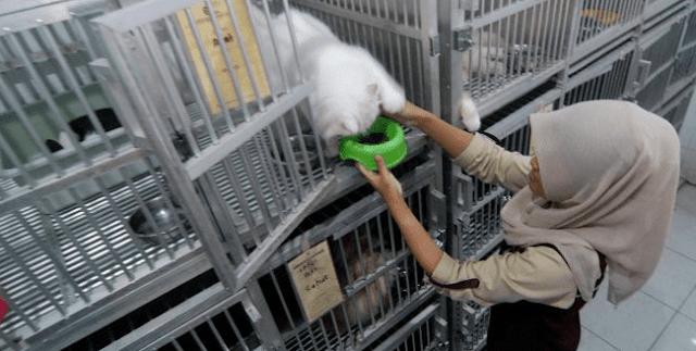 Peluang Usaha Bisnis Penitipan Hewan atau Binatang Peliharaan