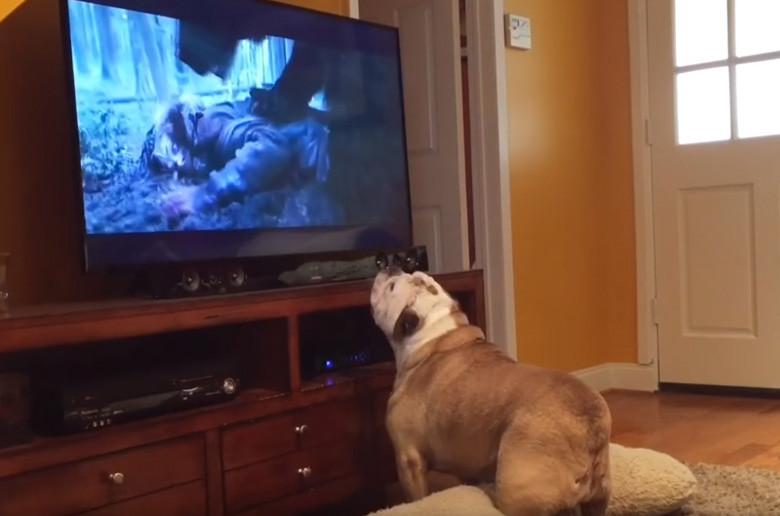 Η σκυλίτσα αυτή θέλει να σώσει τον Leonardo DiCaprio! (βίντεο)