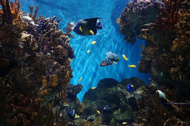 L'Aquarium de Barcelona 1