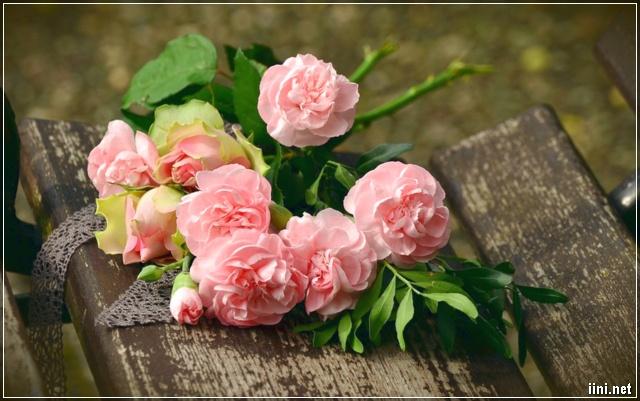 ảnh hoa hồng tháng 10 sinh nhật