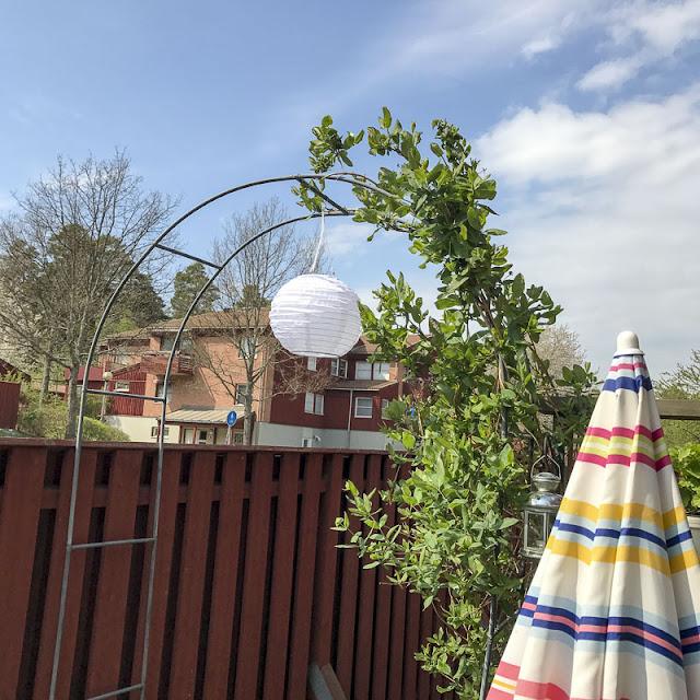 båge, solcellslampa,kaprifol