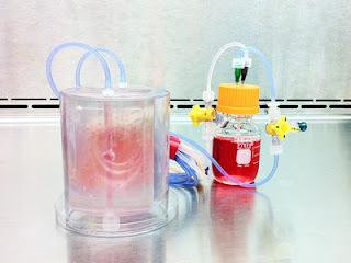 Биореактор с трансплантатом кости, выполненным методом тканевой инженерии