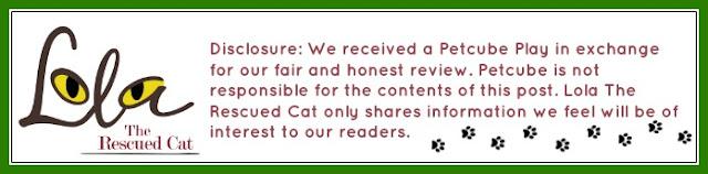 petcube play|pet camera|pet product reviews