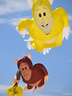 monkey kites