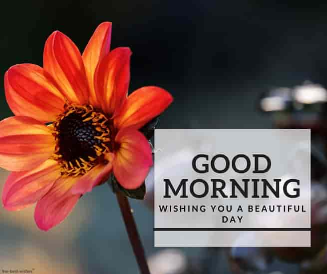 awesome good morning image with orange flower