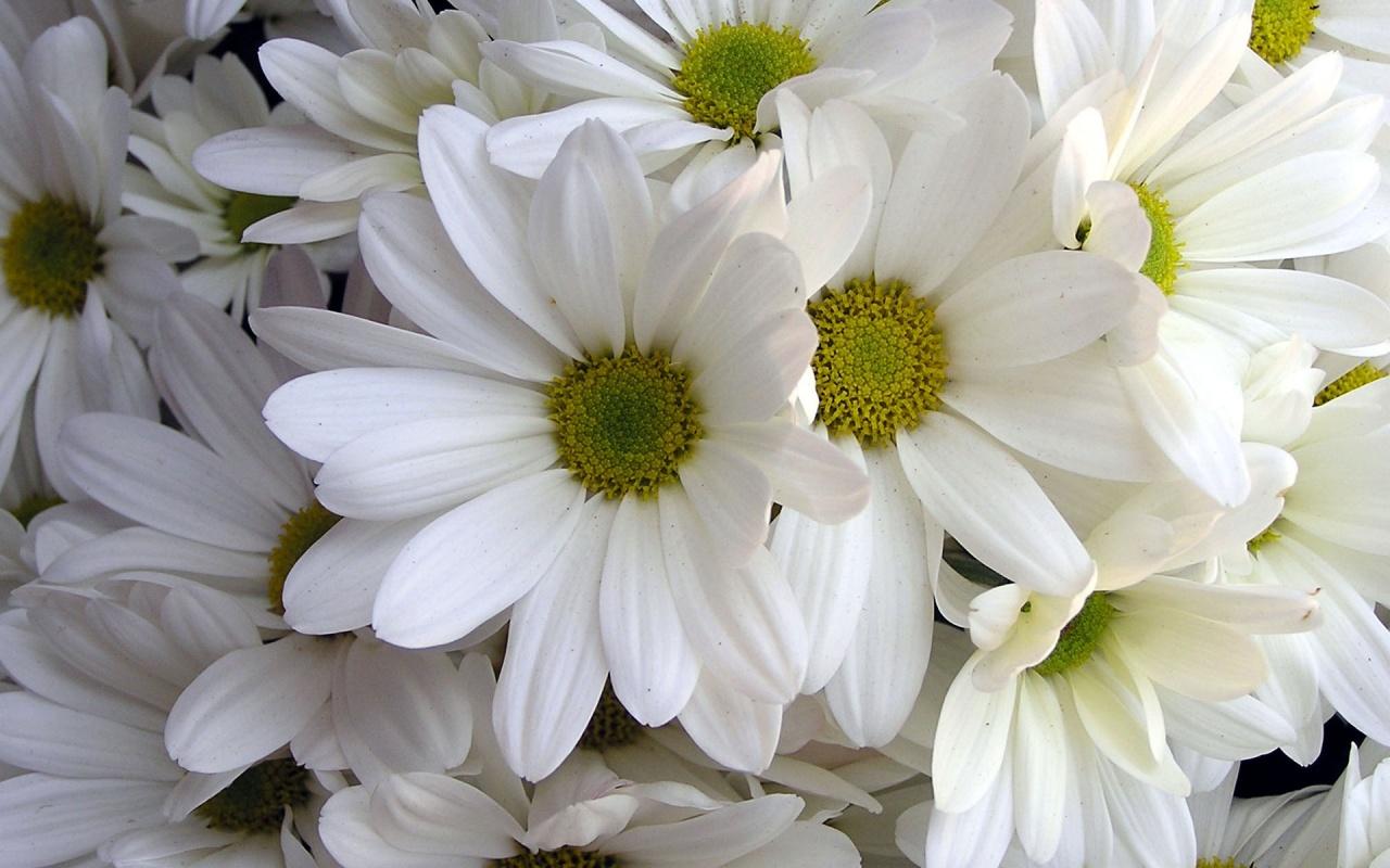 HD Flower Wallpaper Free Download | HD Wallpapers Mac