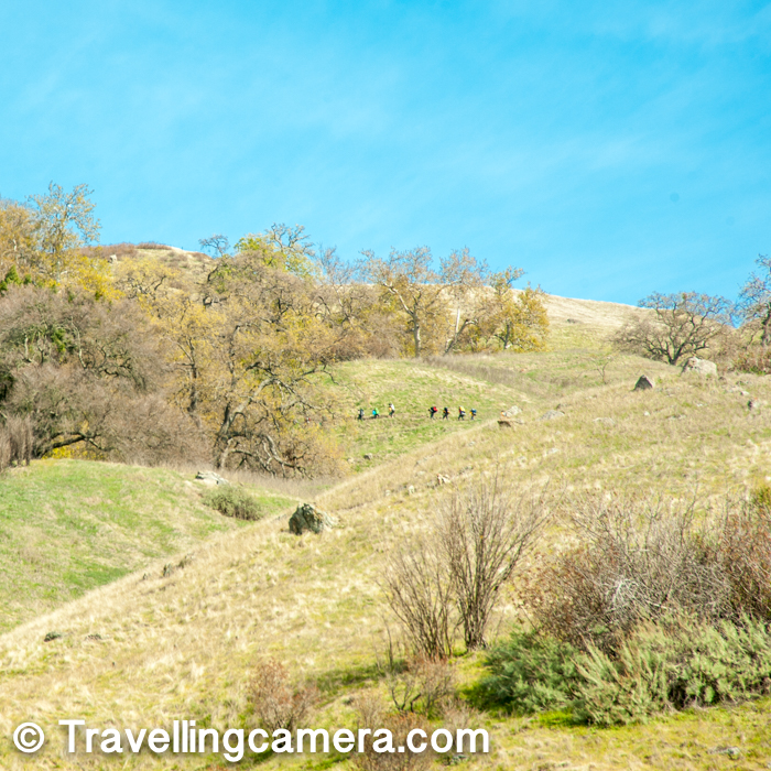 After a while we picked our trail and started climbing up. We loved seeing many of these hikers at distant hills and we also had to go through the same trail. Trails inside Sunol park are well defined like other hikes in California and they are also designed in a way that you don't feel tired too early. I didn't find any part as too steep.