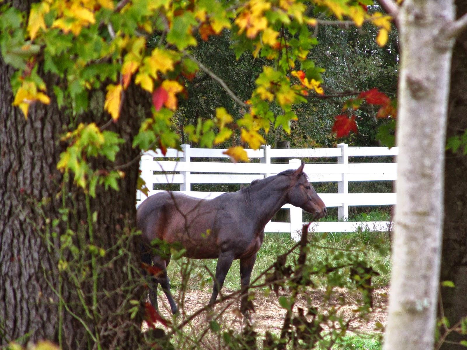horses, autumn