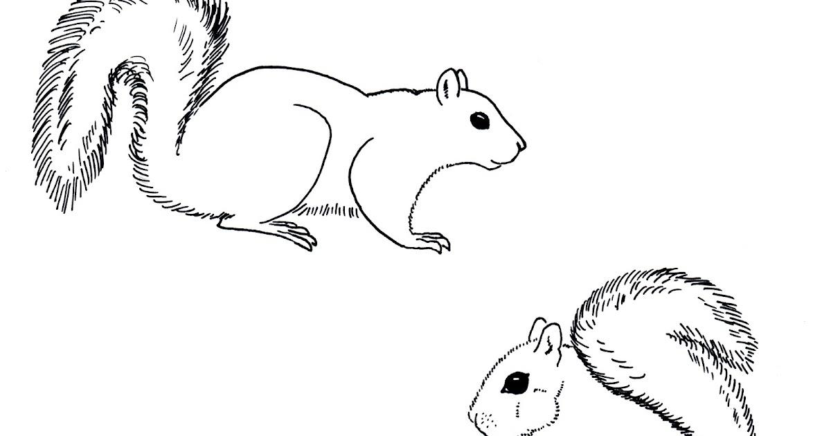 Chuck Does Art: Coloring Sheets: Grey Squirrels
