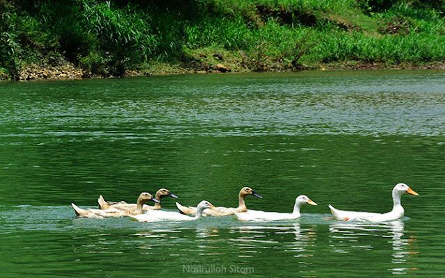 Mencari mangsa di aliran sungai Oya