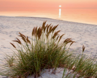 Beach Colony Vacation Condo in Perdido Key Florida