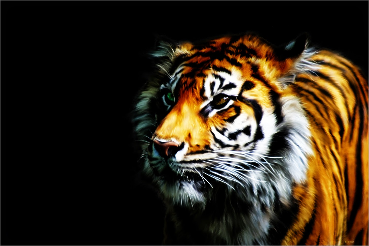 Collection Of Best Animal Wallpapers: HD Wallpapers, Free High Definition Desktop Backgrounds
