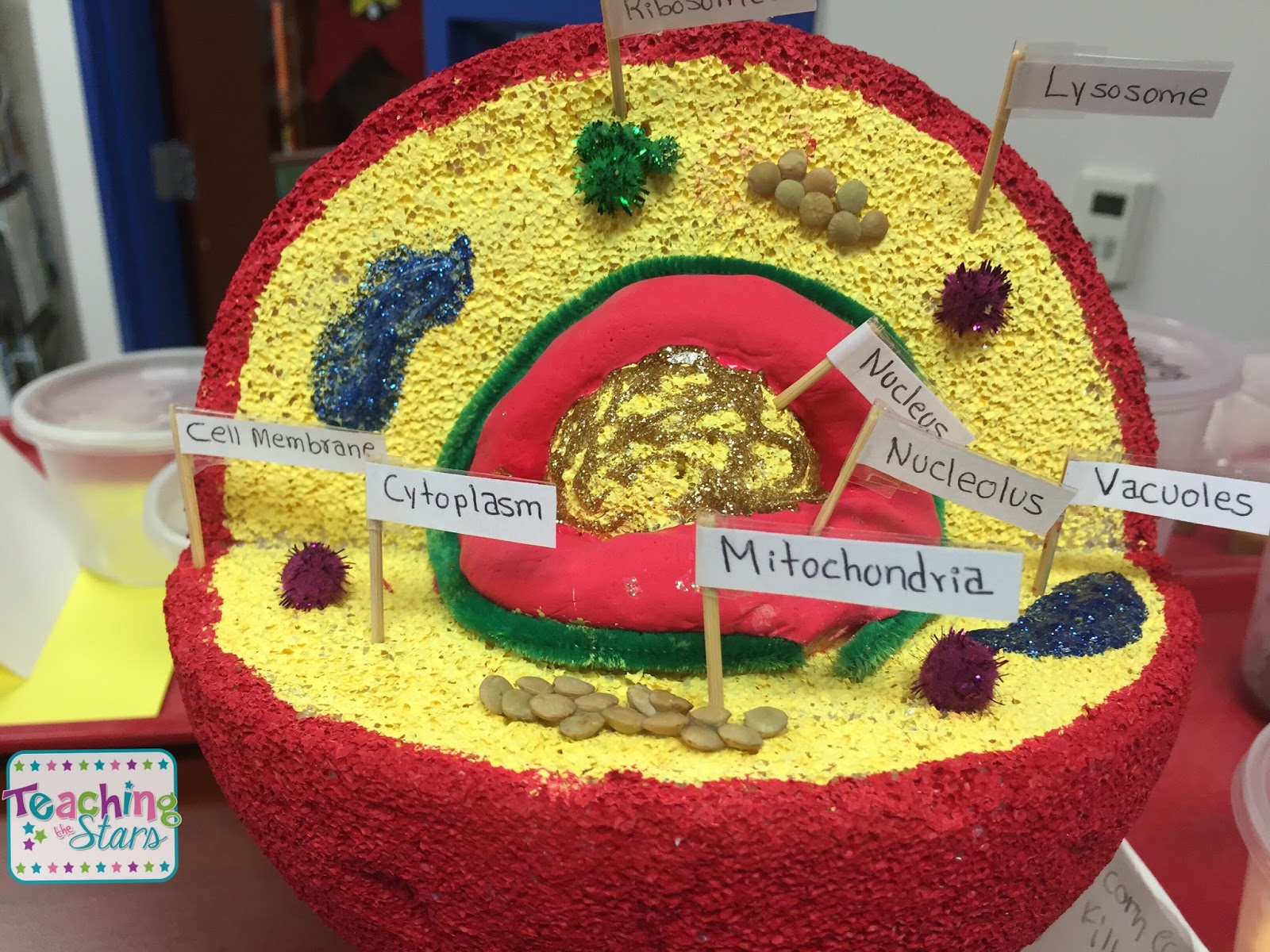 Animal and Plant Cell Models - Teaching the Stars