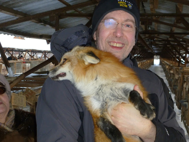 A tame fox cuddles up to Dr. Lee Dugatkin in Russia