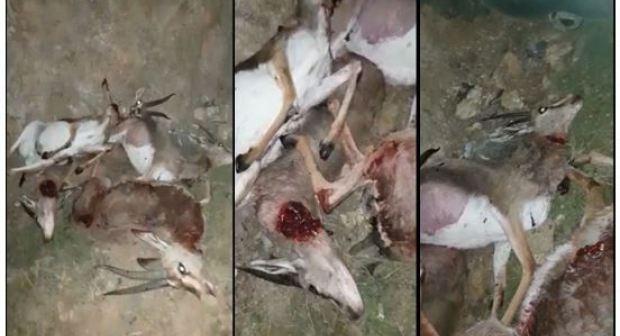 إدانة قاتل الغزلان الخمسة بالحبس و الغرامة