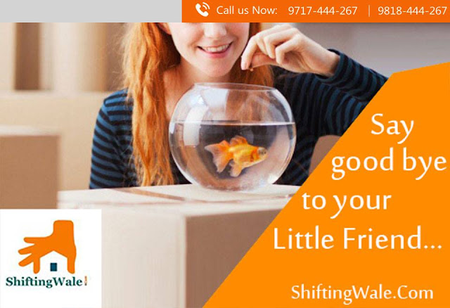 Packers and Movers Services from Gurugram to Patiala, Household Shifting Services from Gurugram to Patiala