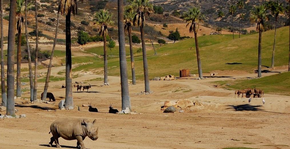 San Diego Zoo Safari Park na Califórnia