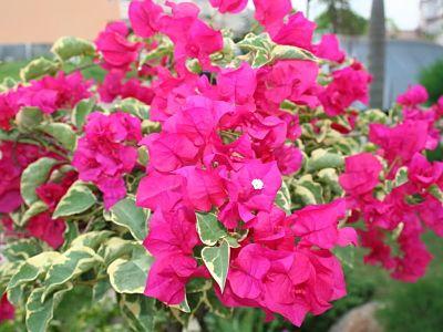 15 Jenis Tanaman Bunga Yang Gampang Ditanam Di Taman