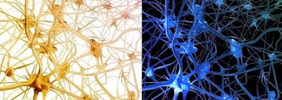 La neurogénesis es posible en algunos casos