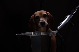 Italian Moka Stove-Top Coffee Maker And Beagle Dog