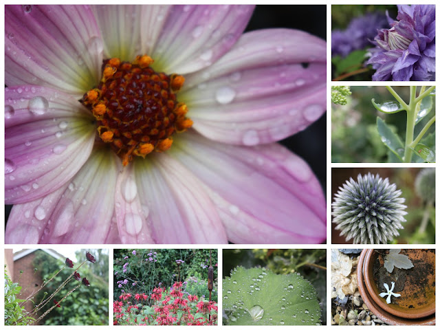 Singing in the rain... again - a collage of rainy photos from the garden