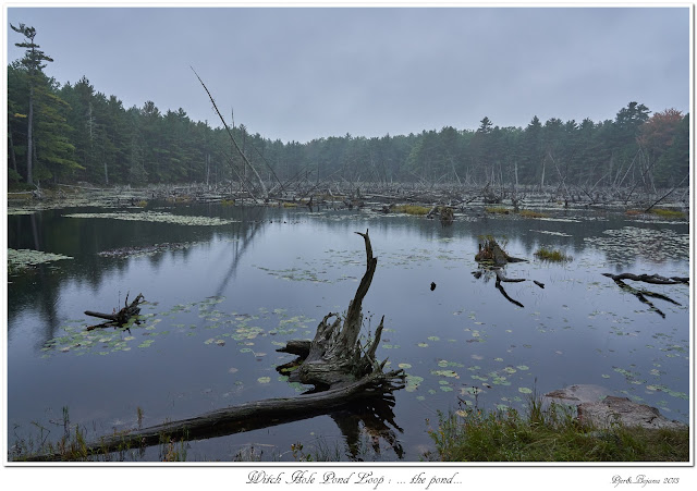 Witch Hole Pond Loop: ... the pond...
