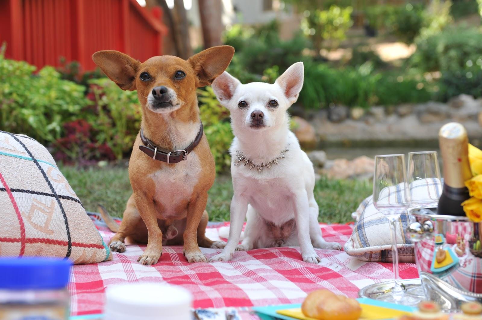 Beverly Hills Chihuahua 1 Ganzer Film Deutsch