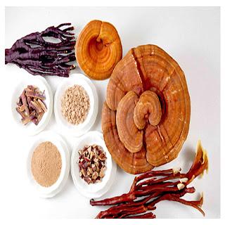 Những đối tượng nào nên dùng nấm linh chi