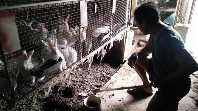 Nuôi thỏ newzealand trên quê hương '5 tấn', lãi gấp 10 lần nuôi vịt - Ảnh 2