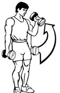 Standing-hammer-Dumbbell-curl