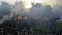 личный состав пожарной части неоднократно выезжал в д. Коровякова на тушение сухой травы