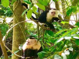 sapne me monkey dekhna सपने में मंकी देखना