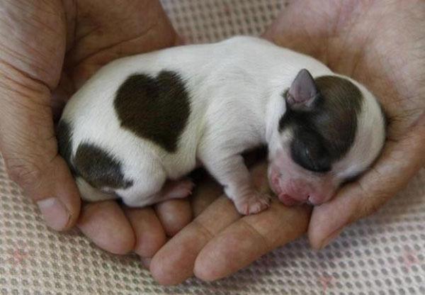 Khoảnh khắc chào đón thế giới mới của 15 em cún đáng yêu