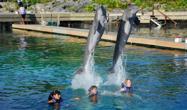 Nade com os golfinhos em Cancún