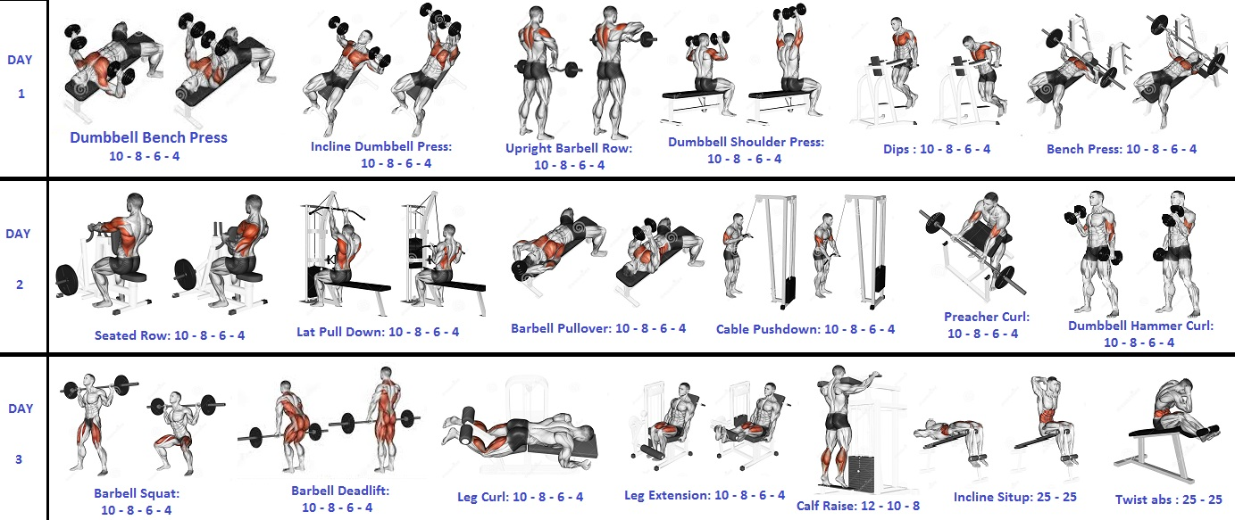 Weight Lifting Workouts: The 3 Day Fast Track Mass Gainer ...