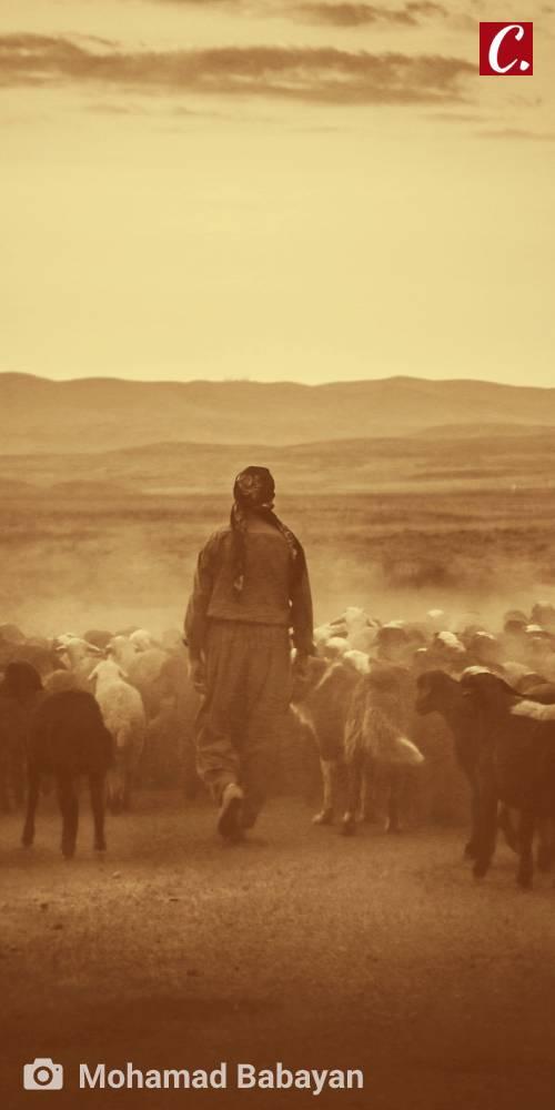 ambiente de leitura carlos romero milton marques junior apl pastor de ovelhas evangelho de joao jesus poesia com jesus amor cristao