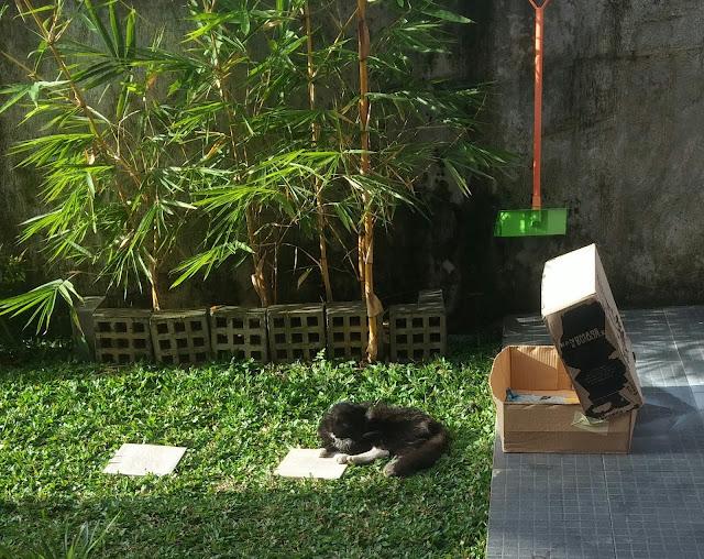 arti kucing datang ke rumah
