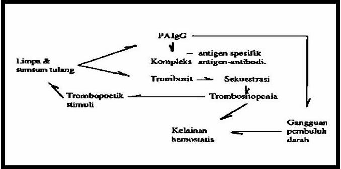 Patofisiologi terjadinya trompositopenia pada Idiopathic Thrombocytopenic Purpura